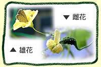 gp_hana.jpg
